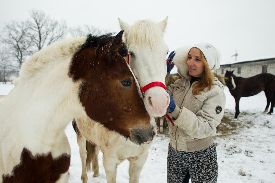 Калининградцы спасли 28 дрессированных лошадей, собрав средства на их содержание